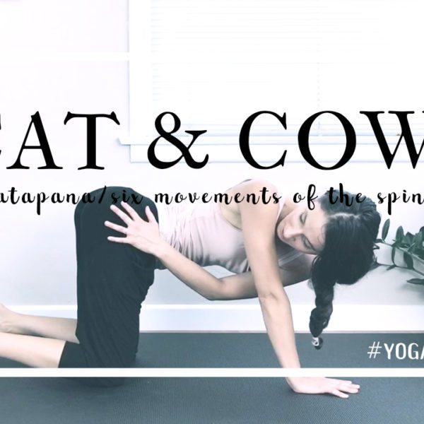 Pratapana in Cat & Cow