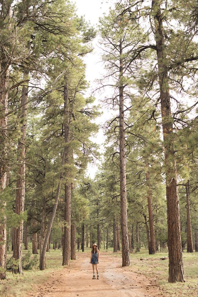 Ilona Barnhart amont tall redwoods in Colorado, Grand Canyon nature walk
